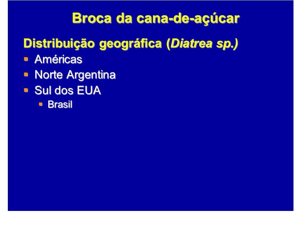 Distribuição geográfica (Diatrea sp.) Américas Américas Norte Argentina Norte Argentina Sul dos EUA Sul dos EUA Brasil Brasil Broca da cana-de-açúcar