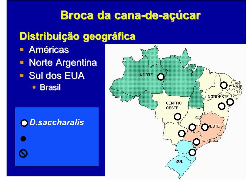 Distribuição geográfica Américas Américas Norte Argentina Norte Argentina Sul dos EUA Sul dos EUA Brasil Brasil Broca da cana-de-açúcar D.saccharalis