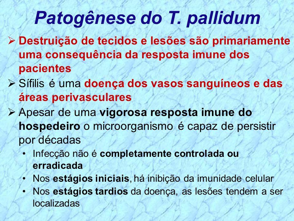Patogênese do T. pallidum Destruição de tecidos e lesões são primariamente uma consequência da resposta imune dos pacientes Sífilis é uma doença dos v