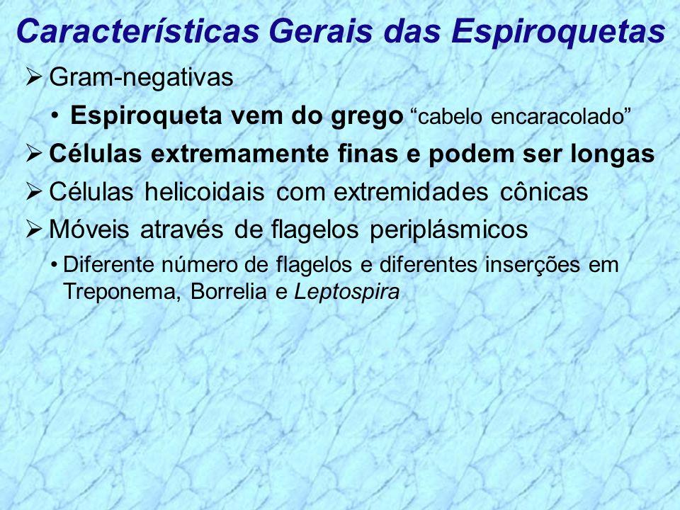 Características Gerais das Espiroquetas Gram-negativas Espiroqueta vem do grego cabelo encaracolado Células extremamente finas e podem ser longas Célu