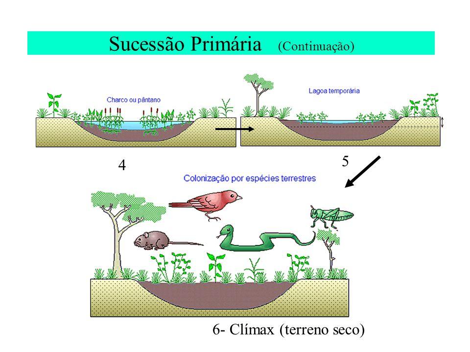 Sucessão Primária (Continuação) 4 5 6- Clímax (terreno seco)