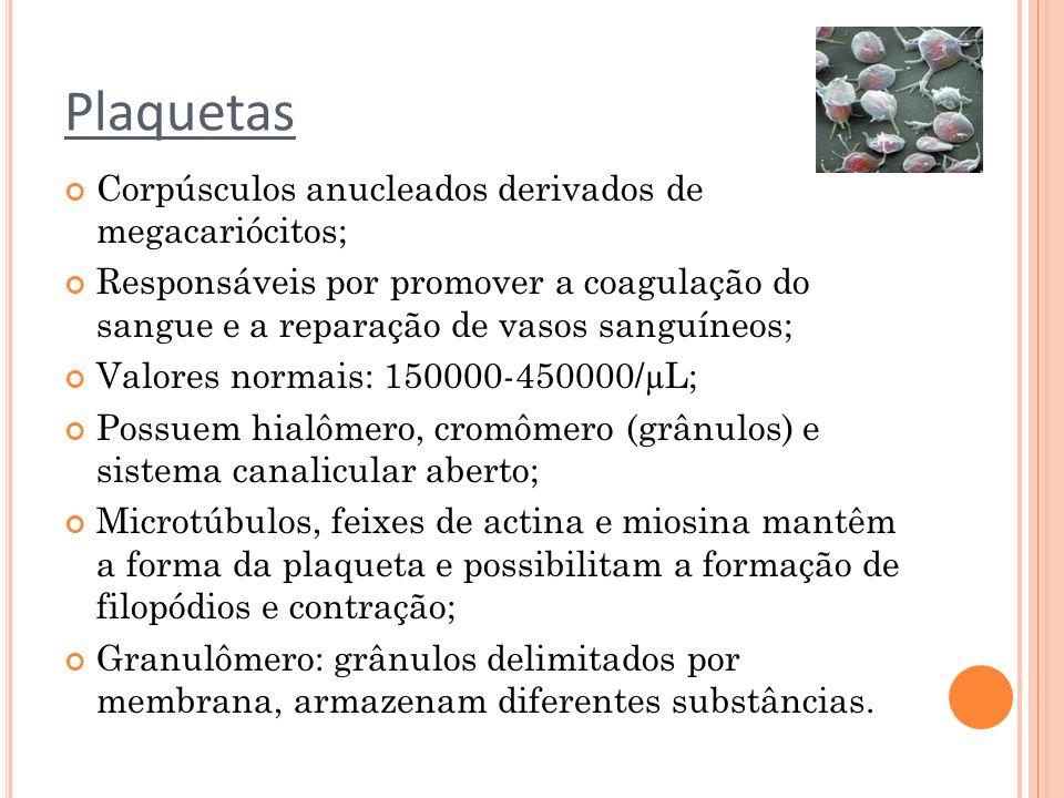 Plaquetas Corpúsculos anucleados derivados de megacariócitos; Responsáveis por promover a coagulação do sangue e a reparação de vasos sanguíneos; Valo