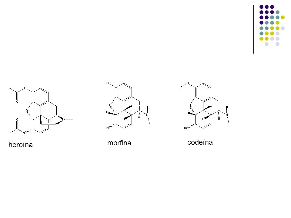 morfina codeína heroína
