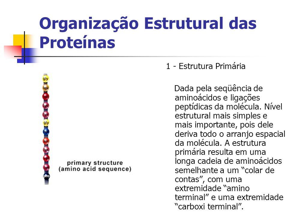 Organização Estrutural das Proteínas 1 - Estrutura Primária Dada pela seqüência de aminoácidos e ligações peptídicas da molécula. Nível estrutural mai
