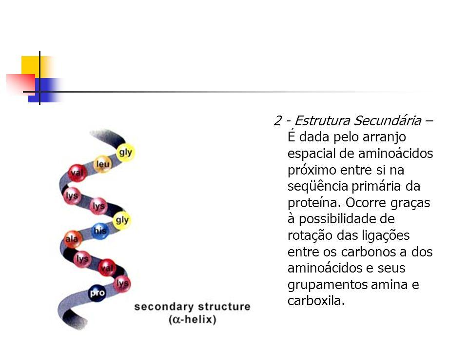2 - Estrutura Secundária – É dada pelo arranjo espacial de aminoácidos próximo entre si na seqüência primária da proteína. Ocorre graças à possibilida