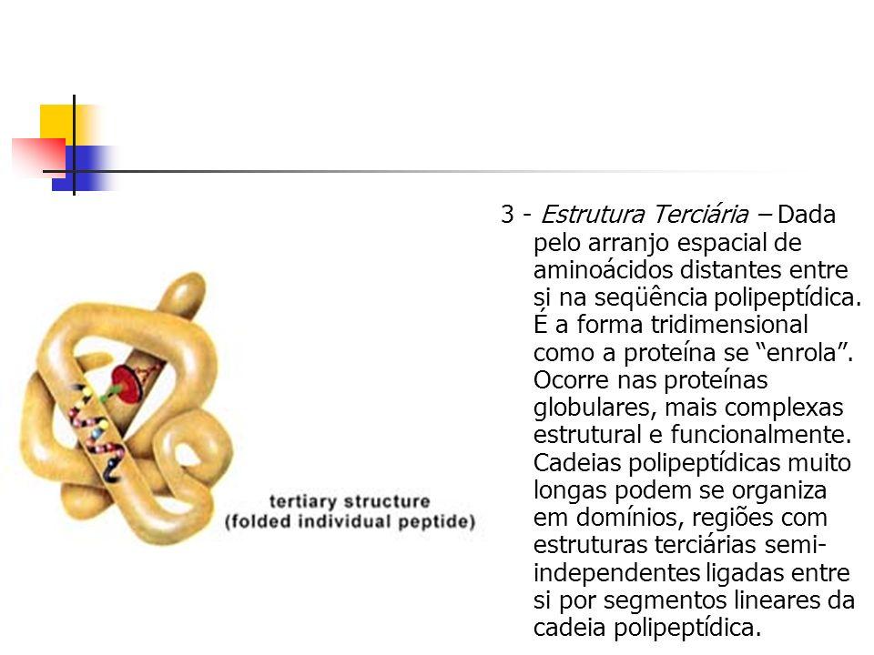 3 - Estrutura Terciária – Dada pelo arranjo espacial de aminoácidos distantes entre si na seqüência polipeptídica. É a forma tridimensional como a pro
