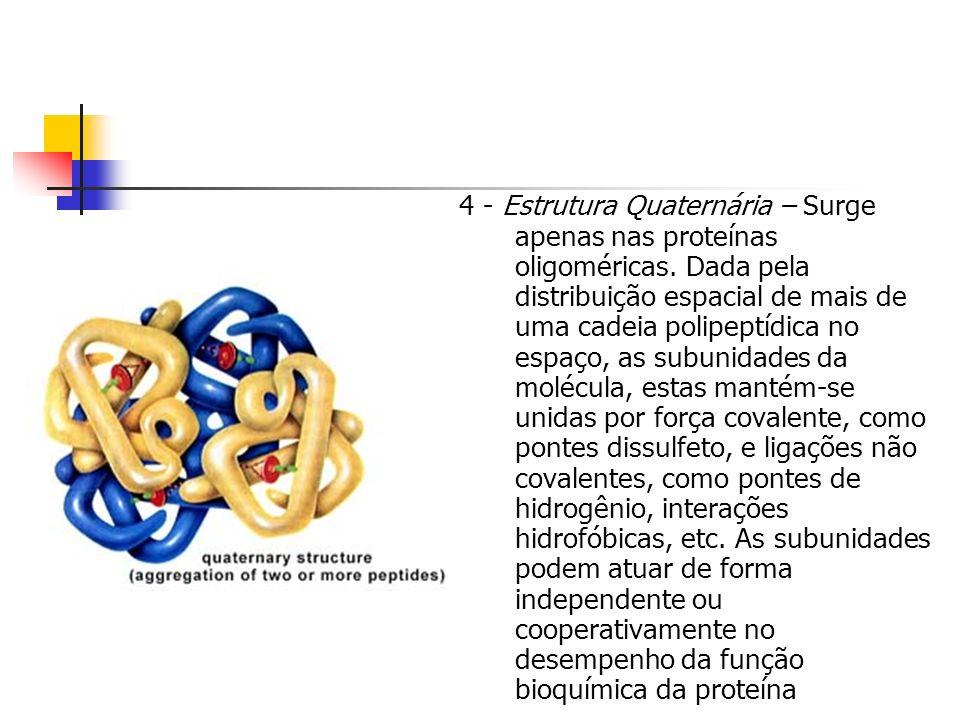 4 - Estrutura Quaternária – Surge apenas nas proteínas oligoméricas. Dada pela distribuição espacial de mais de uma cadeia polipeptídica no espaço, as