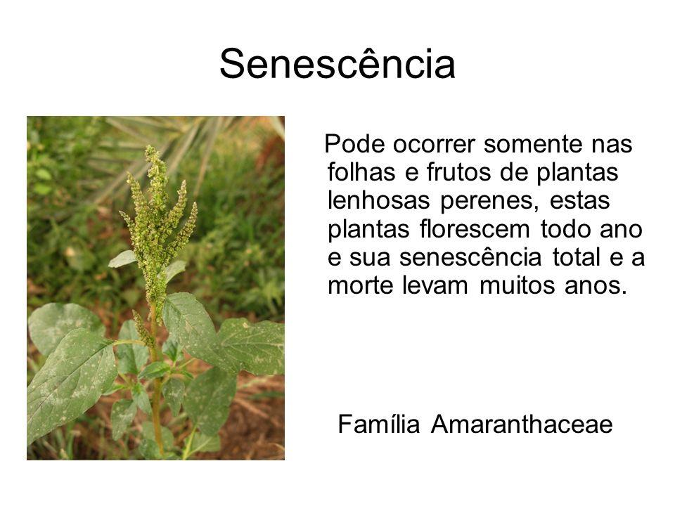 Senescência Pode ocorrer somente nas folhas e frutos de plantas lenhosas perenes, estas plantas florescem todo ano e sua senescência total e a morte l