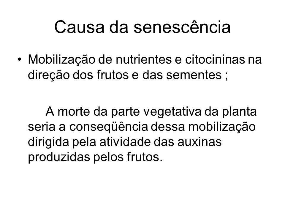 Causa da senescência Mobilização de nutrientes e citocininas na direção dos frutos e das sementes ; A morte da parte vegetativa da planta seria a cons