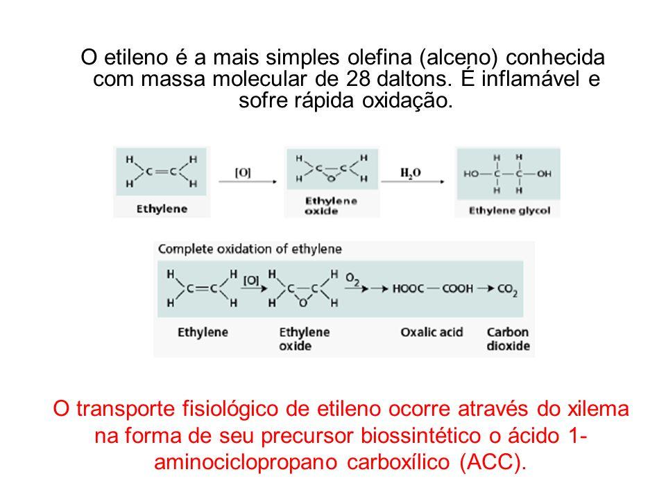 O etileno é a mais simples olefina (alceno) conhecida com massa molecular de 28 daltons. É inflamável e sofre rápida oxidação. O transporte fisiológic