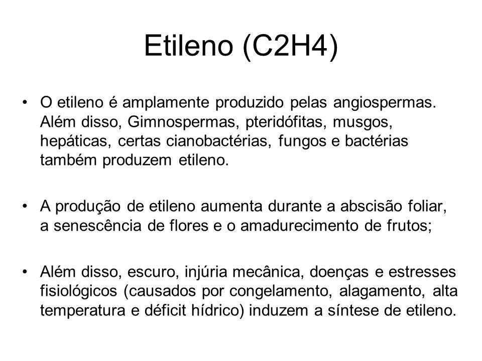 Etileno (C2H4) O etileno é amplamente produzido pelas angiospermas. Além disso, Gimnospermas, pteridófitas, musgos, hepáticas, certas cianobactérias,