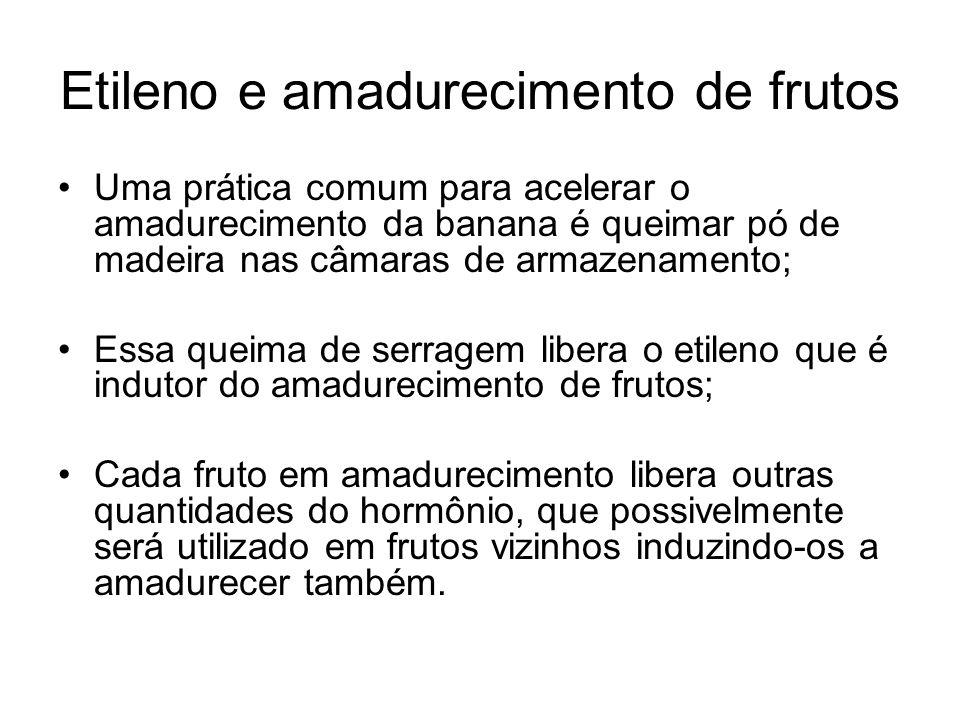 Etileno e amadurecimento de frutos Uma prática comum para acelerar o amadurecimento da banana é queimar pó de madeira nas câmaras de armazenamento; Es