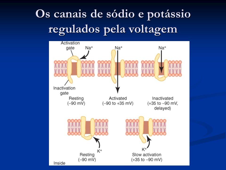 Os canais de sódio e potássio regulados pela voltagem