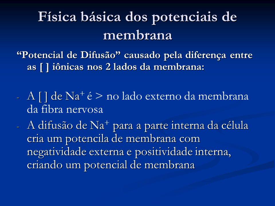 Física básica dos potenciais de membrana Potencial de Difusão causado pela diferença entre as [ ] iônicas nos 2 lados da membrana: - A [ ] de Na - A [