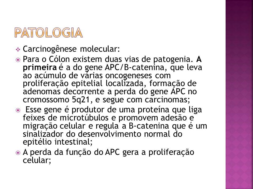 Carcinogênese molecular: Para o Cólon existem duas vias de patogenia. A primeira é a do gene APC/B-catenina, que leva ao acúmulo de várias oncogeneses