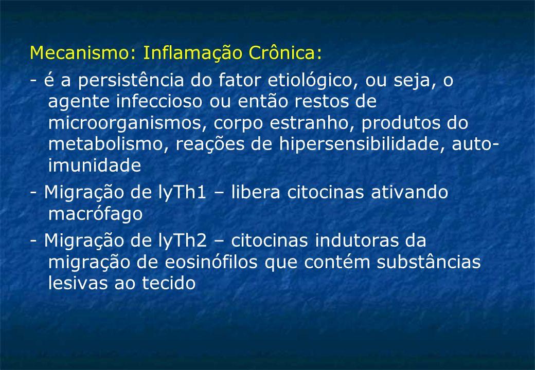 Mecanismo: Inflamação Crônica: - é a persistência do fator etiológico, ou seja, o agente infeccioso ou então restos de microorganismos, corpo estranho, produtos do metabolismo, reações de hipersensibilidade, auto- imunidade - Migração de lyTh1 – libera citocinas ativando macrófago - Migração de lyTh2 – citocinas indutoras da migração de eosinófilos que contém substâncias lesivas ao tecido
