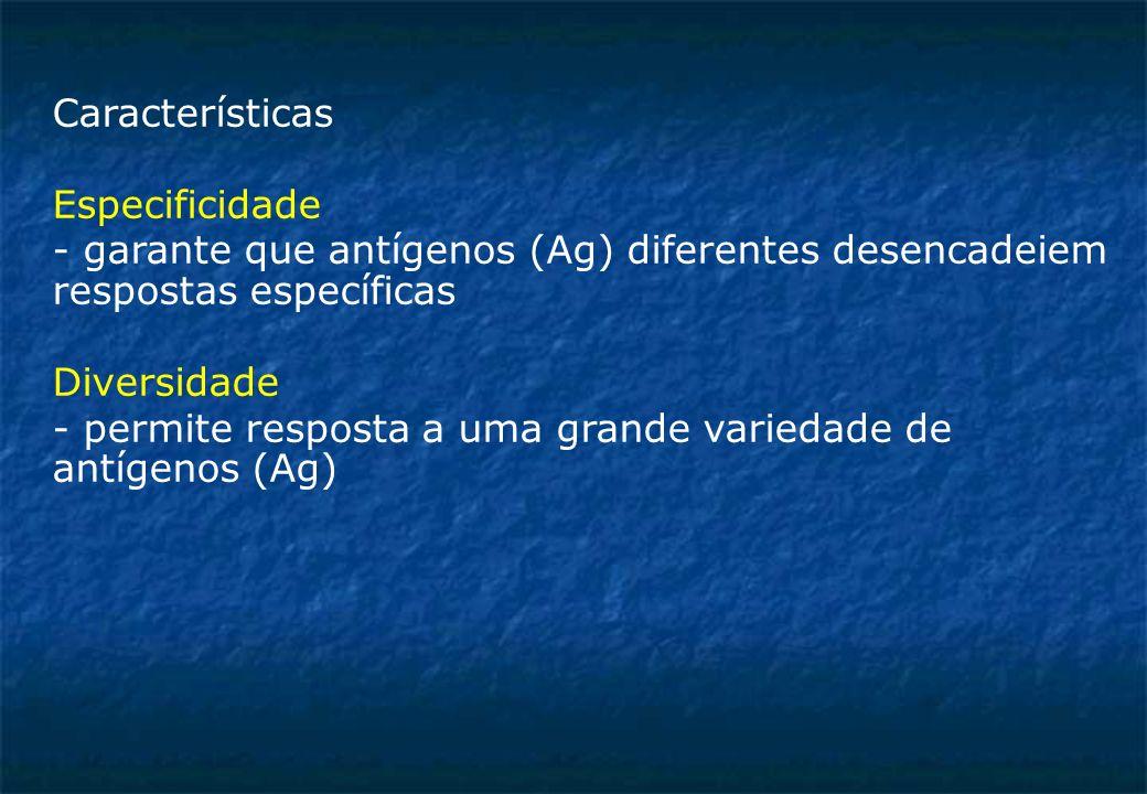 Características Especificidade - garante que antígenos (Ag) diferentes desencadeiem respostas específicas Diversidade - permite resposta a uma grande variedade de antígenos (Ag)