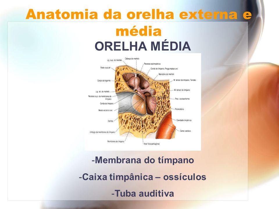 ORELHA MÉDIA Anatomia da orelha externa e média -Membrana do tímpano -Caixa timpânica – ossículos -Tuba auditiva