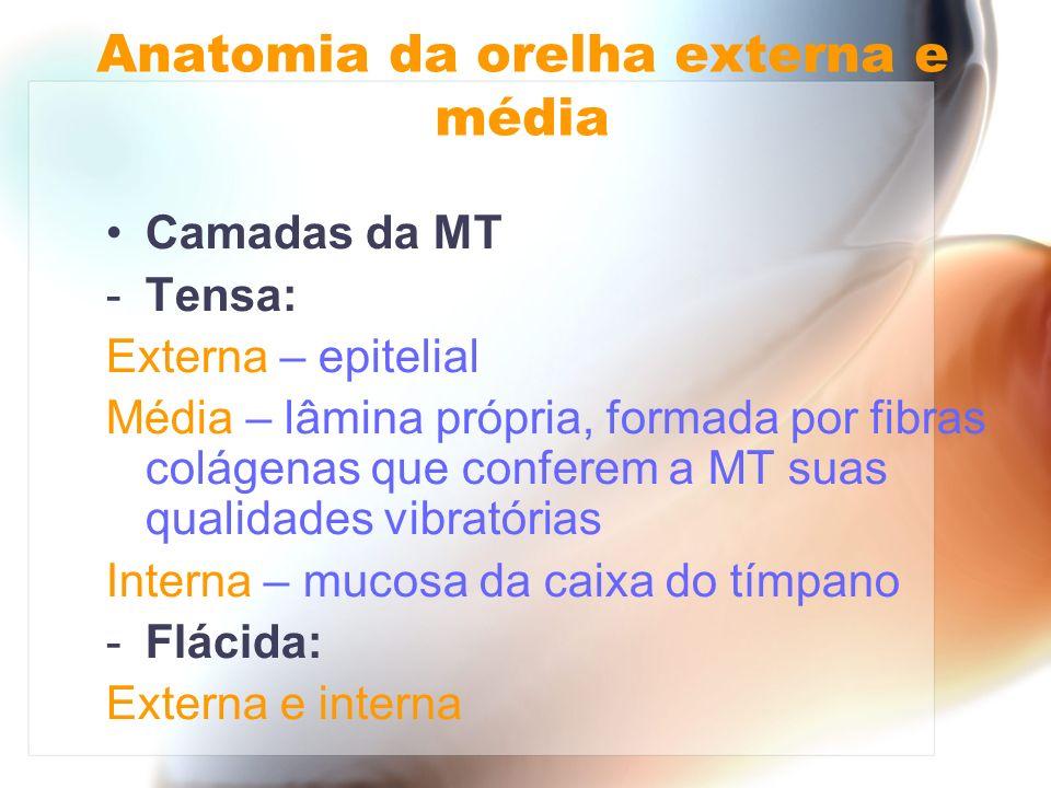 Camadas da MT -Tensa: Externa – epitelial Média – lâmina própria, formada por fibras colágenas que conferem a MT suas qualidades vibratórias Interna –
