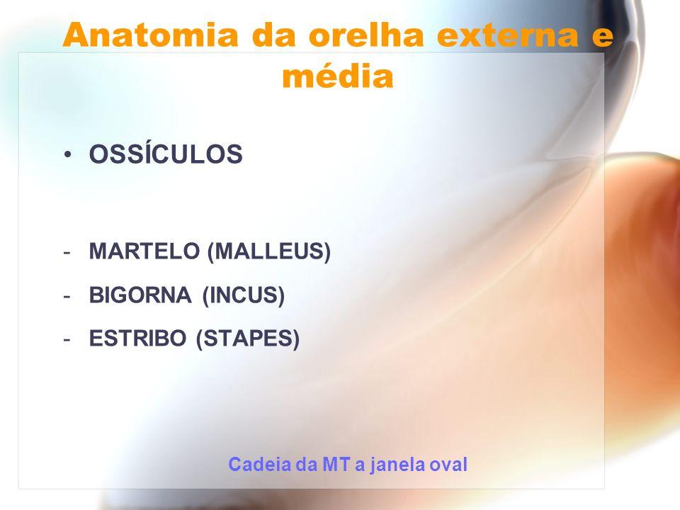 OSSÍCULOS -MARTELO (MALLEUS) -BIGORNA (INCUS) -ESTRIBO (STAPES) Cadeia da MT a janela oval Anatomia da orelha externa e média
