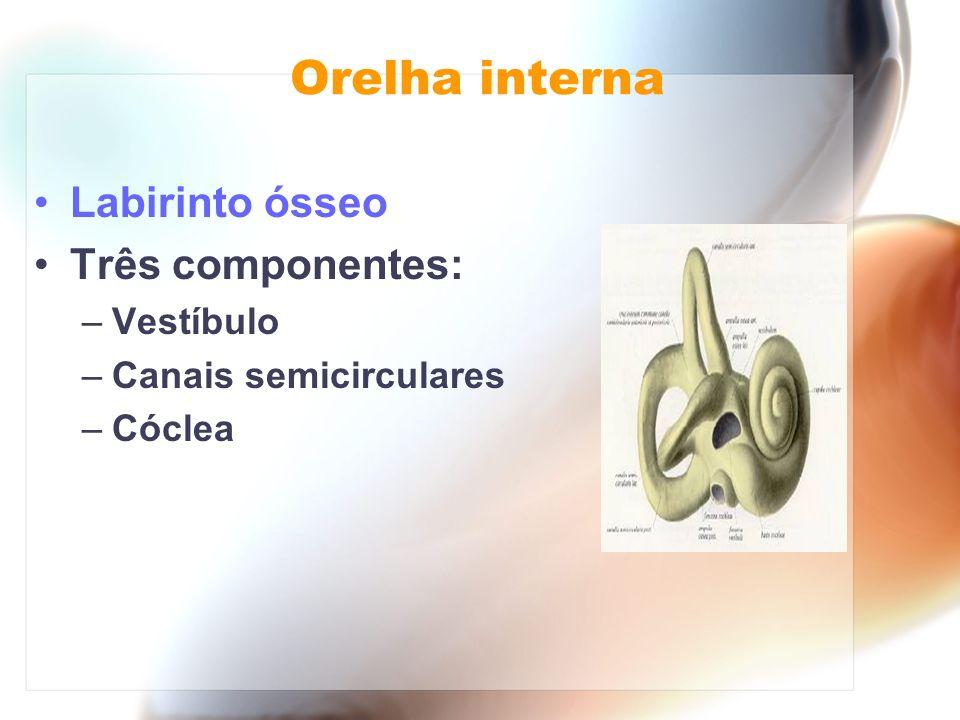Orelha interna Labirinto ósseo Três componentes: –Vestíbulo –Canais semicirculares –Cóclea