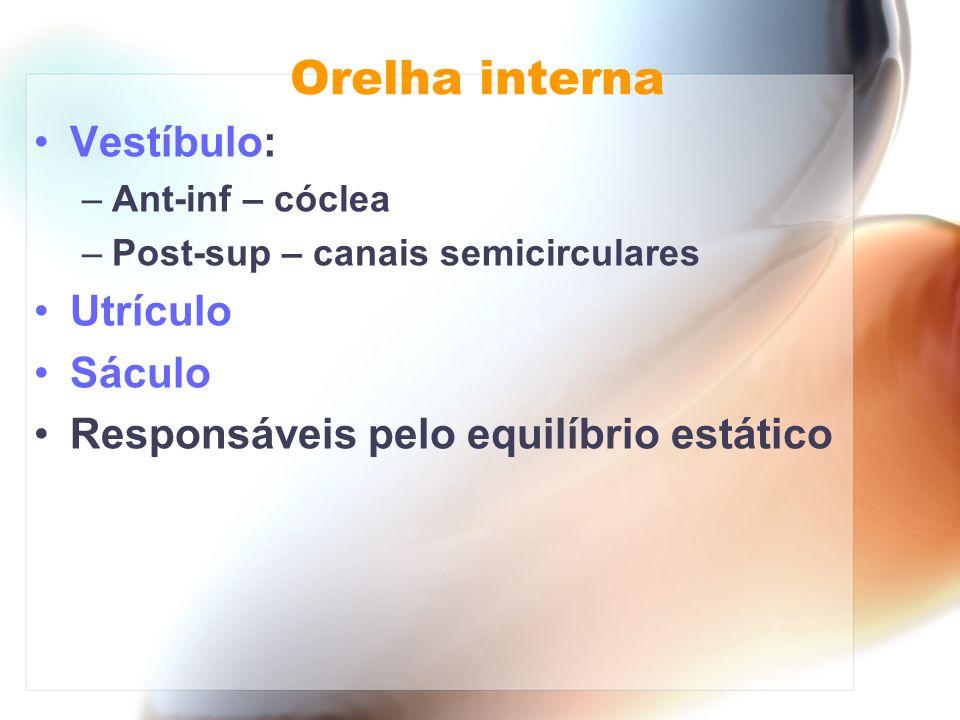 Orelha interna Vestíbulo: –Ant-inf – cóclea –Post-sup – canais semicirculares Utrículo Sáculo Responsáveis pelo equilíbrio estático