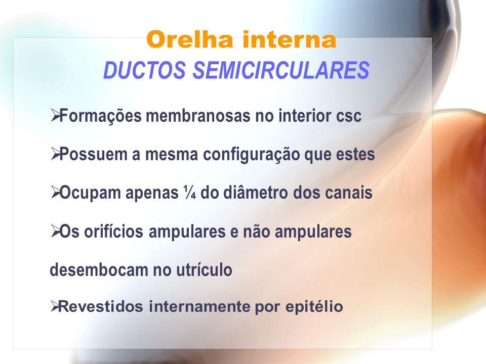 DUCTOS SEMICIRCULARES Formações membranosas no interior csc Possuem a mesma configuração que estes Ocupam apenas ¼ do diâmetro dos canais Os orifícios