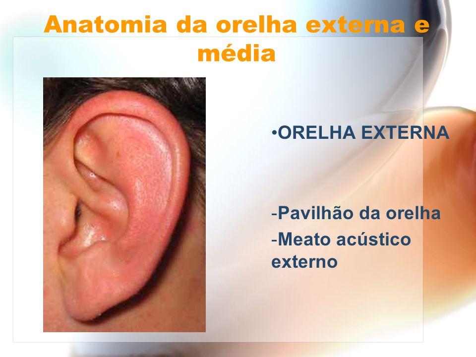 Anatomia da orelha externa e média Ligação entre meio externo (ambiente) e interno (orelha média - interna) Defesa local Ressonância acústica Via de acesso cirúrgico à orelha média - interna