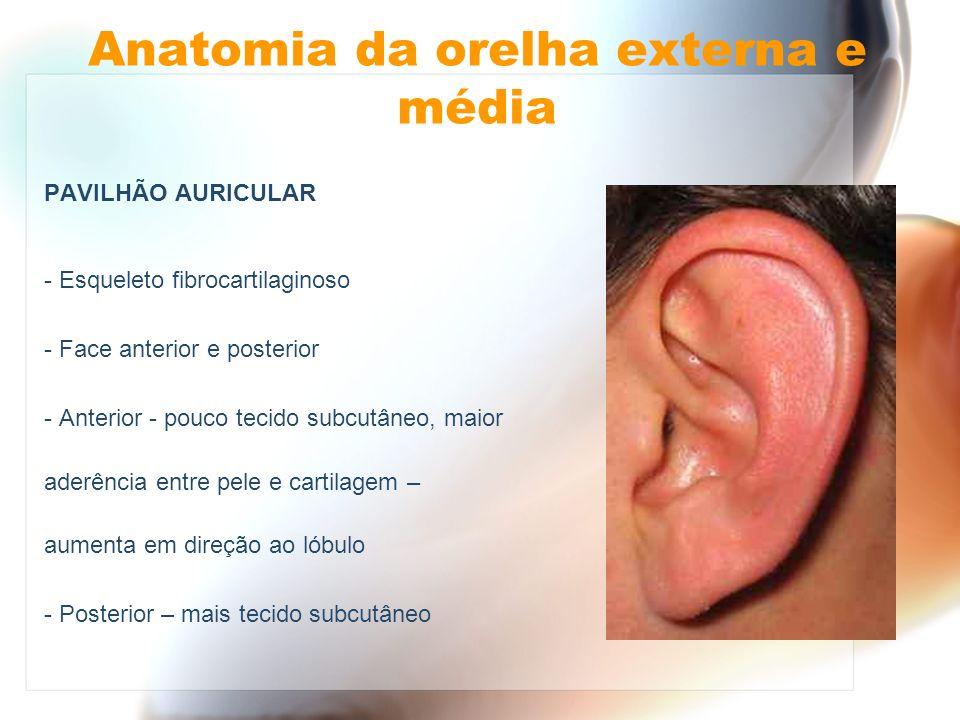 Anatomia da orelha externa e média PAVILHÃO AURICULAR - Esqueleto fibrocartilaginoso - Face anterior e posterior - Anterior - pouco tecido subcutâneo,
