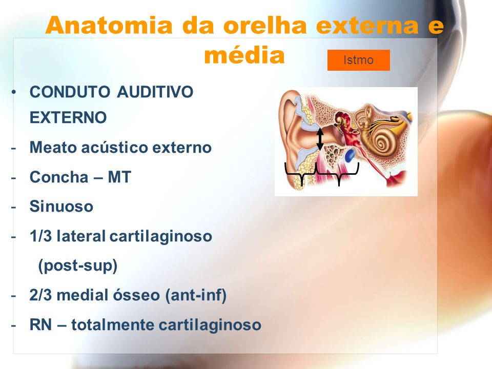 Orelha interna Canais semicirculares 1) LATERAL / HORIZONTAL 2) SUPERIOR / SAGITAL / ANTERIOR 3) POSTERIOR / FRONTAL