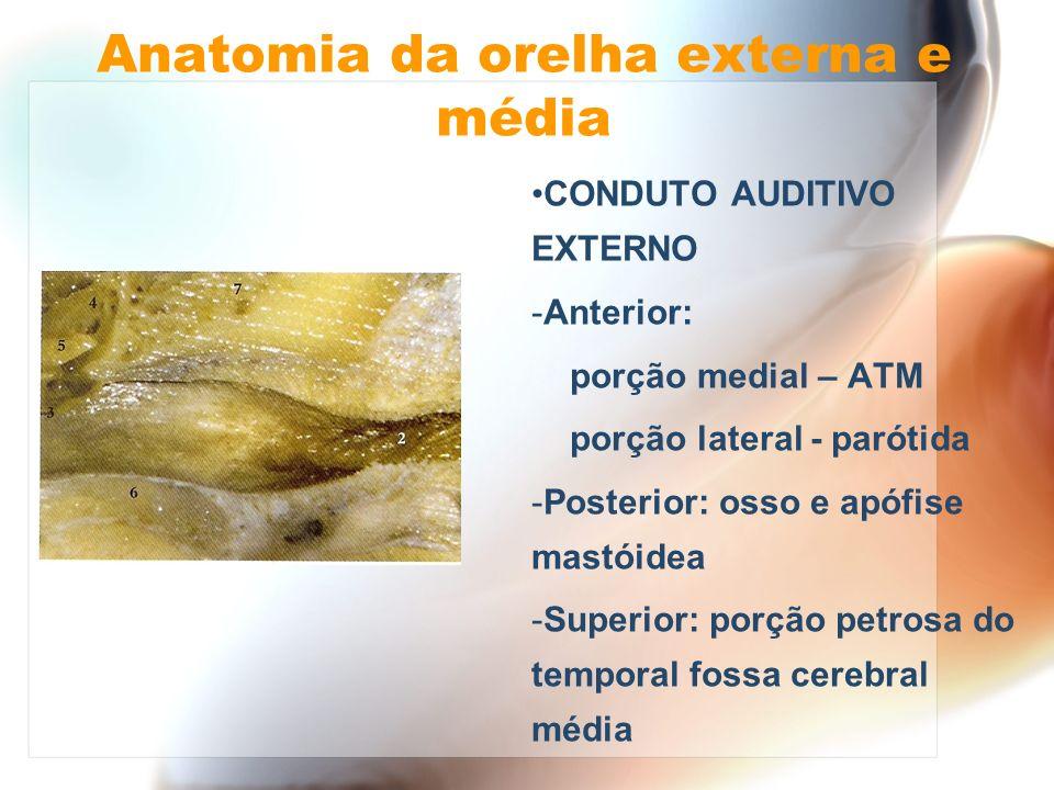 Anatomia da orelha externa e média CONDUTO AUDITIVO EXTERNO - Anterior: porção medial – ATM porção lateral - parótida - Posterior: osso e apófise mast