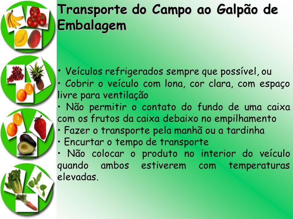 Transporte do Campo ao Galpão de Embalagem Veículos refrigerados sempre que possível, ou Cobrir o veículo com lona, cor clara, com espaço livre para v
