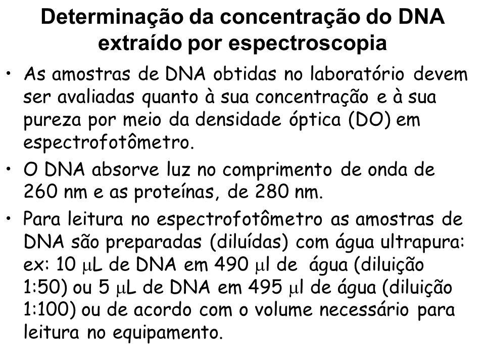 Determinação da concentração do DNA extraído Para estimar a concentração de DNA, utiliza- se a seguinte relação: 1 DO 260nm = 50 g de DNA de dupla fita*.