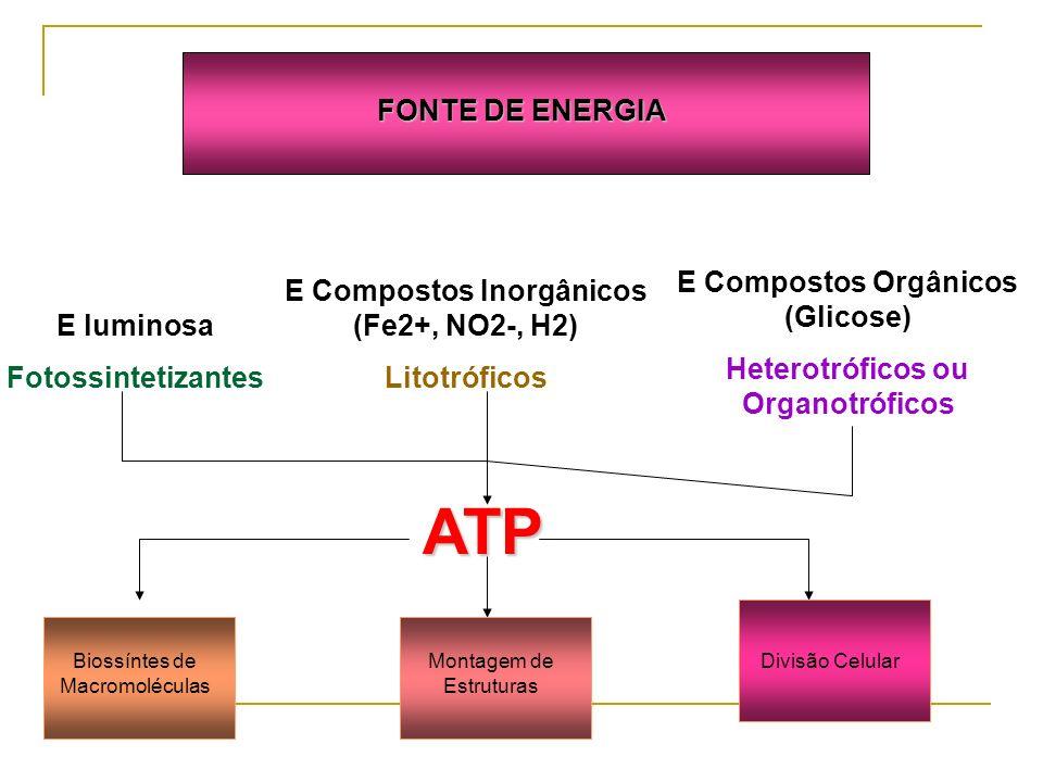 FONTE DE ENERGIA E luminosa Fotossintetizantes E Compostos Inorgânicos (Fe2+, NO2-, H2) Litotróficos E Compostos Orgânicos (Glicose) Heterotróficos ou