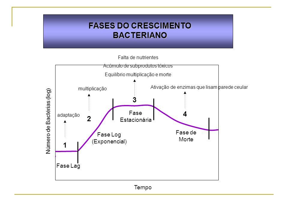 FASES DO CRESCIMENTO BACTERIANO 1 2 3 4 Número de Bactérias (log) Tempo Fase Lag Fase Log (Exponencial) Fase Estacionária Fase de Morte adaptação mult