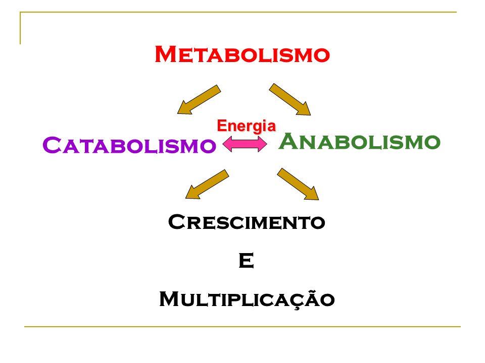 Metabolismo Catabolismo Anabolismo Energia Crescimento E Multiplicação