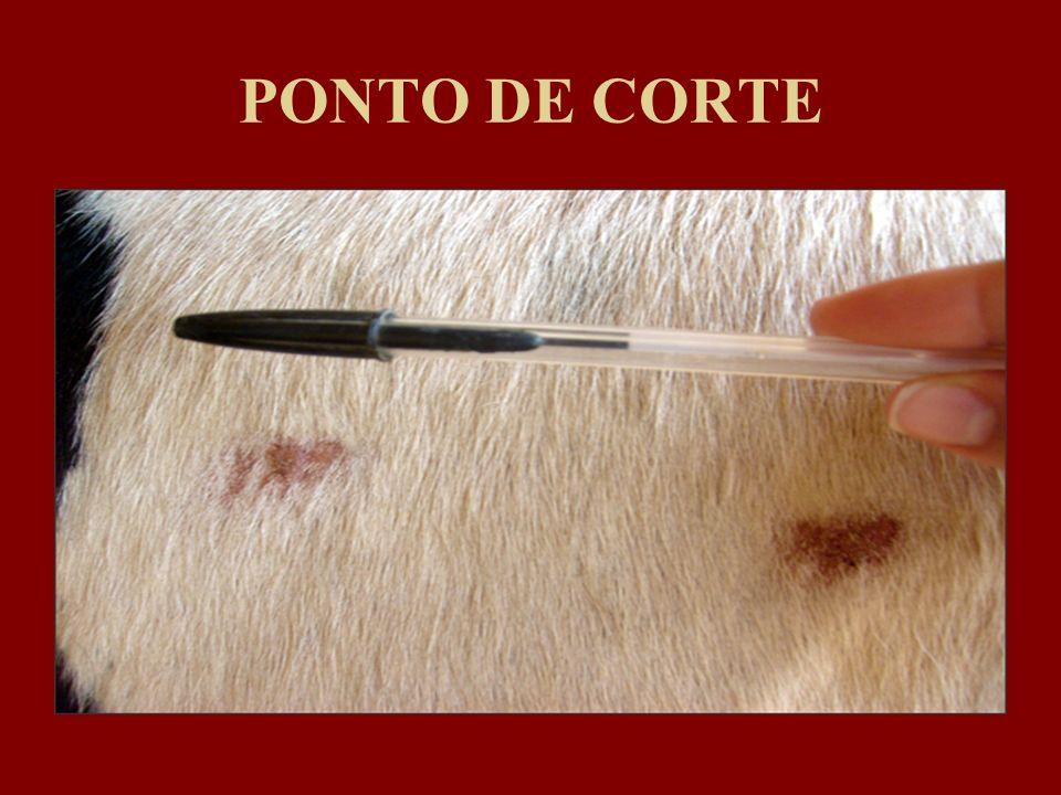PONTO DE CORTE