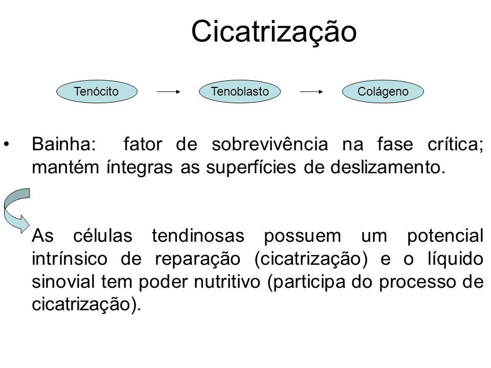 Cicatrização Bainha: fator de sobrevivência na fase crítica; mantém íntegras as superfícies de deslizamento. As células tendinosas possuem um potencia