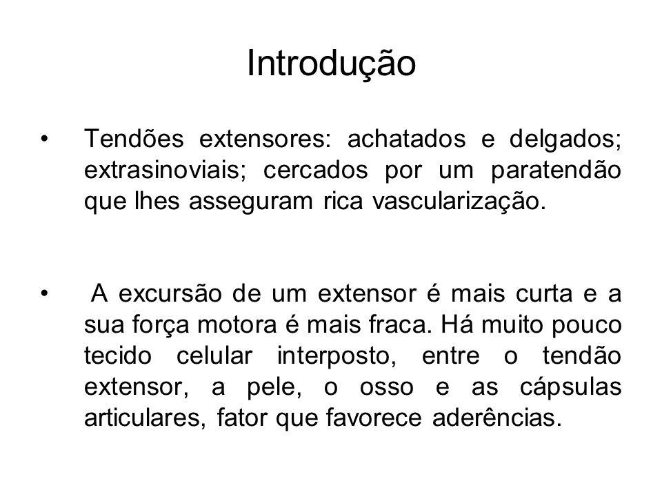 Introdução Tendões extensores: achatados e delgados; extrasinoviais; cercados por um paratendão que lhes asseguram rica vascularização. A excursão de