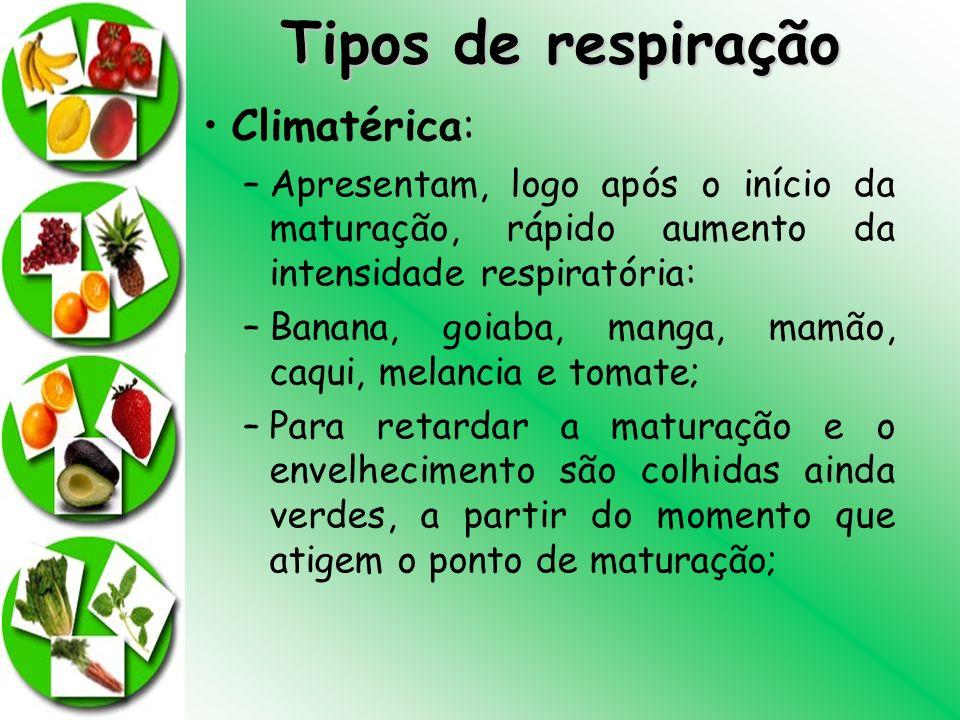 Tipos de respiração Climatérica: –Apresentam, logo após o início da maturação, rápido aumento da intensidade respiratória: –Banana, goiaba, manga, mam