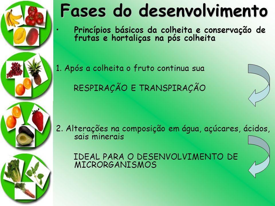 Fases do desenvolvimento Princípios básicos da colheita e conservação de frutas e hortaliças na pós colheita 1. Após a colheita o fruto continua sua R