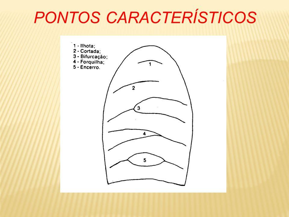 PONTOS CARACTERÍSTICOS são os acidentes encontrados nas cristas papilares são os elementos individualizadores de impressão digital a evidenciação de 1