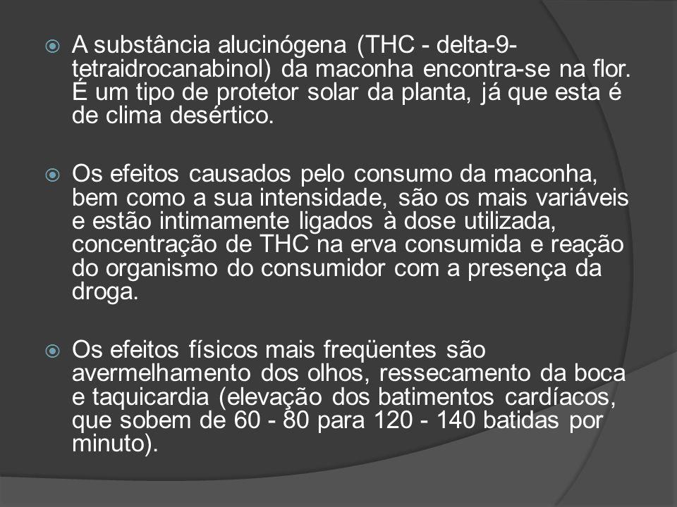A substância alucinógena (THC - delta-9- tetraidrocanabinol) da maconha encontra-se na flor. É um tipo de protetor solar da planta, já que esta é de c