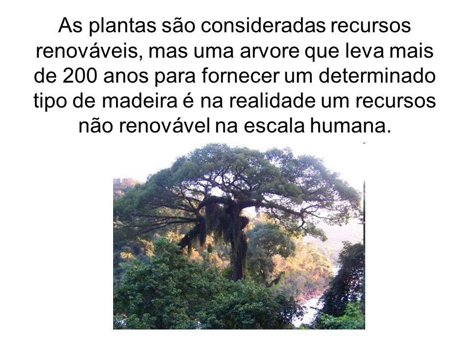 As plantas são consideradas recursos renováveis, mas uma arvore que leva mais de 200 anos para fornecer um determinado tipo de madeira é na realidade
