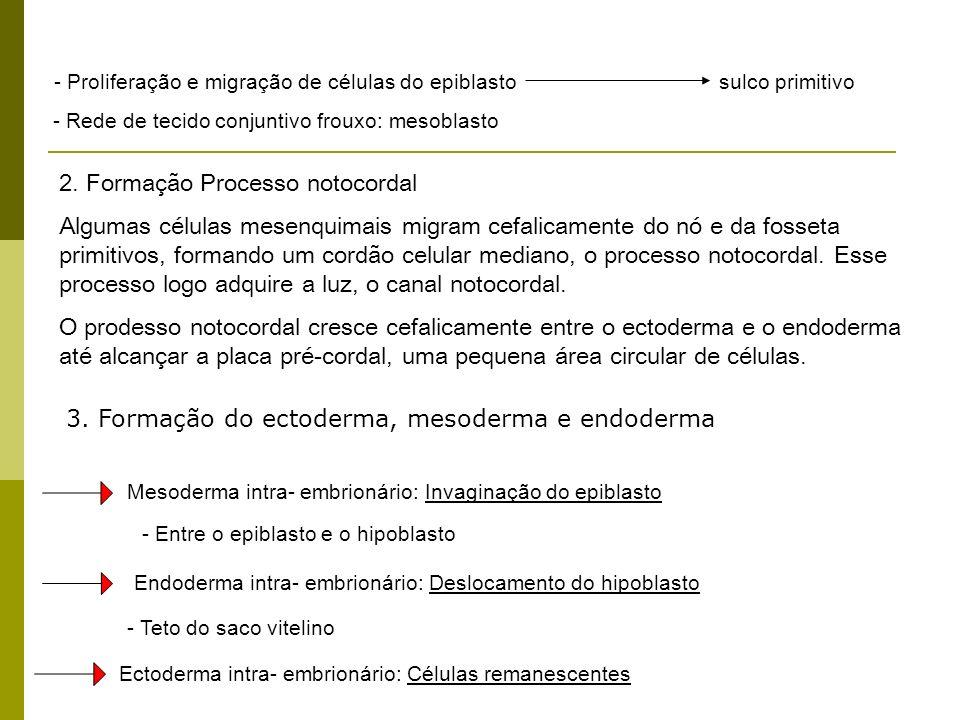 - Proliferação e migração de células do epiblastosulco primitivo - Rede de tecido conjuntivo frouxo: mesoblasto - Entre o epiblasto e o hipoblasto Mes