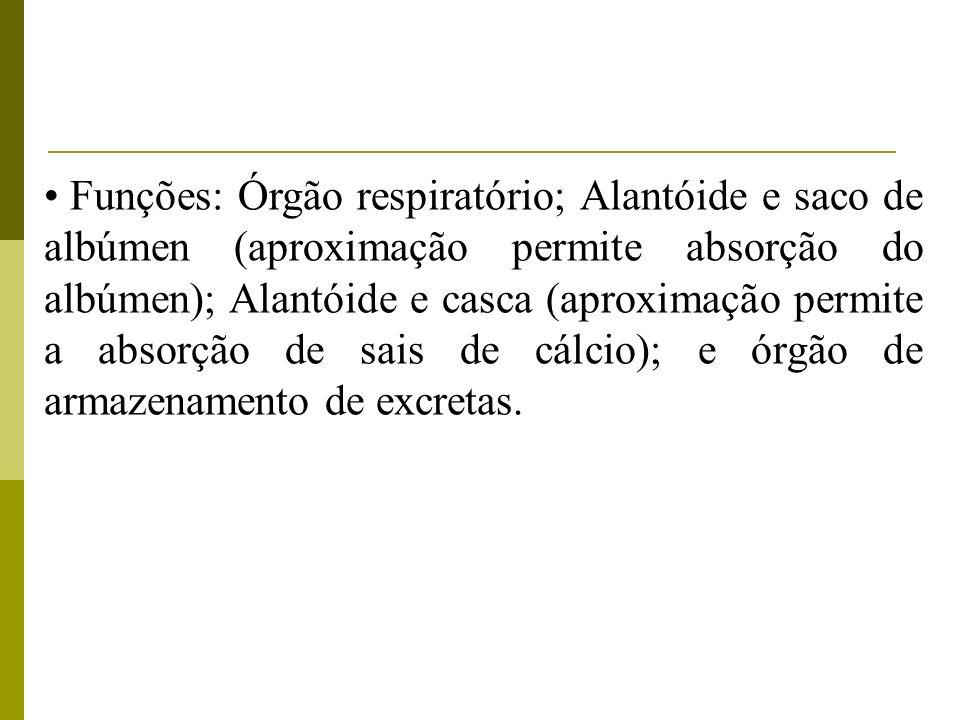 Funções: Órgão respiratório; Alantóide e saco de albúmen (aproximação permite absorção do albúmen); Alantóide e casca (aproximação permite a absorção