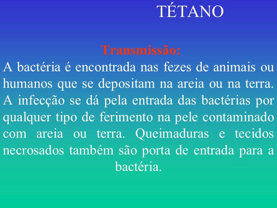 TÉTANO Transmissão: A bactéria é encontrada nas fezes de animais ou humanos que se depositam na areia ou na terra. A infecção se dá pela entrada das b