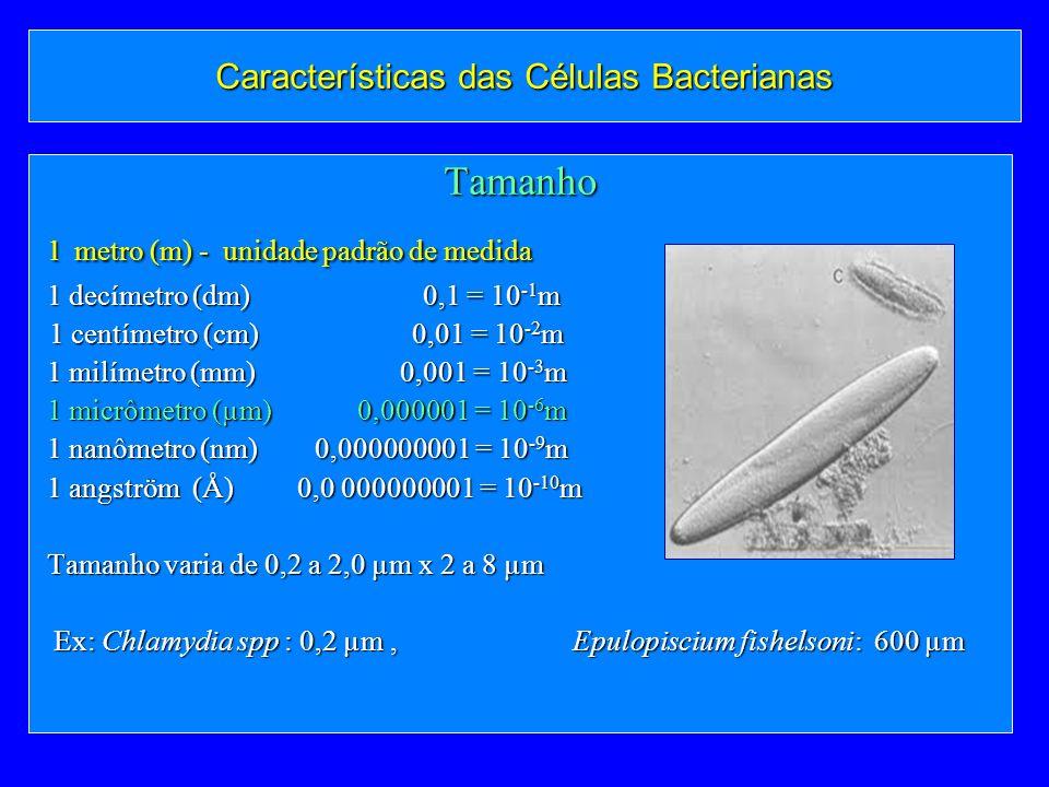 Características das Células Bacterianas Tamanho 1 metro (m) - unidade padrão de medida 1 metro (m) - unidade padrão de medida 1 decímetro (dm) 0,1 = 1