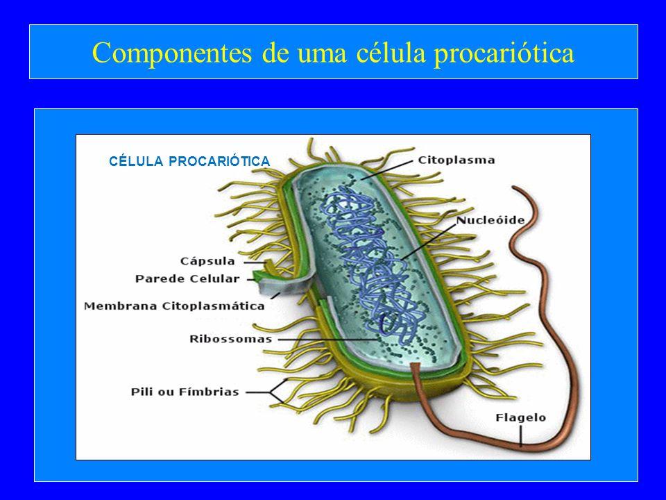 Componentes de uma célula procariótica CÉLULA PROCARIÓTICA