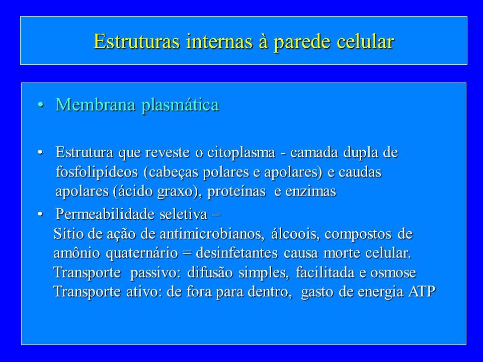 Estruturas internas à parede celular Membrana plasmáticaMembrana plasmática Estrutura que reveste o citoplasma - camada dupla de fosfolipídeos (cabeça